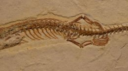 Four-Legged Snake Fossil Discovered