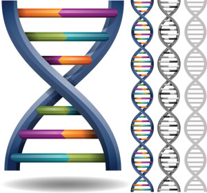 Four-stranded-quadruple-helix-DNA-structurein-human-cells