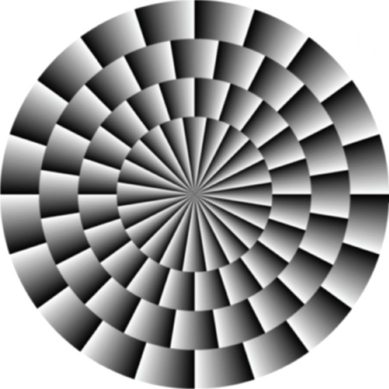 optical illusions illusion eyes explained fraser wilcox vision fly human neuroscientists mystified flies teaches reality virtual scitechdaily science eurekalert wired