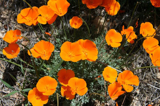 Future warming may lead to dramatic changes in flowering