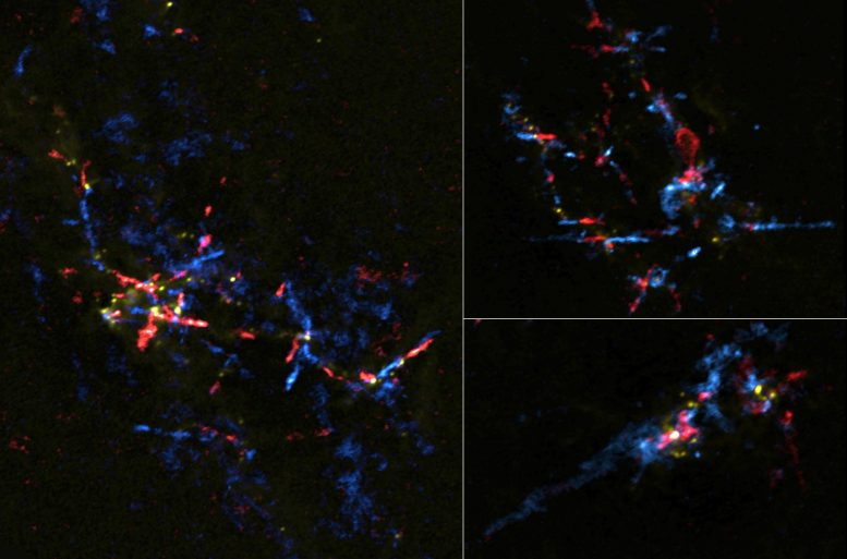 Gas Outflows From Stellar Eggs in the Galactic Center Region