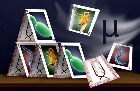 Gene Expression Evolves Under a House-of-Cards Model