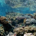 Gene-Expression-Indicates-How-Coral-Reefs-Will-Handle-Climate-Change