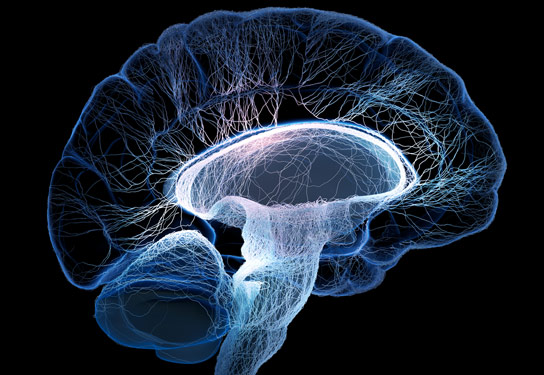 genetics brain structure and behavior future A thorough understanding of genetics is essential to  effects of natural selection on genomic structure  of the neuronal circuits in the brain.