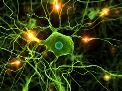 Gene therapy shows promise in neuron repair