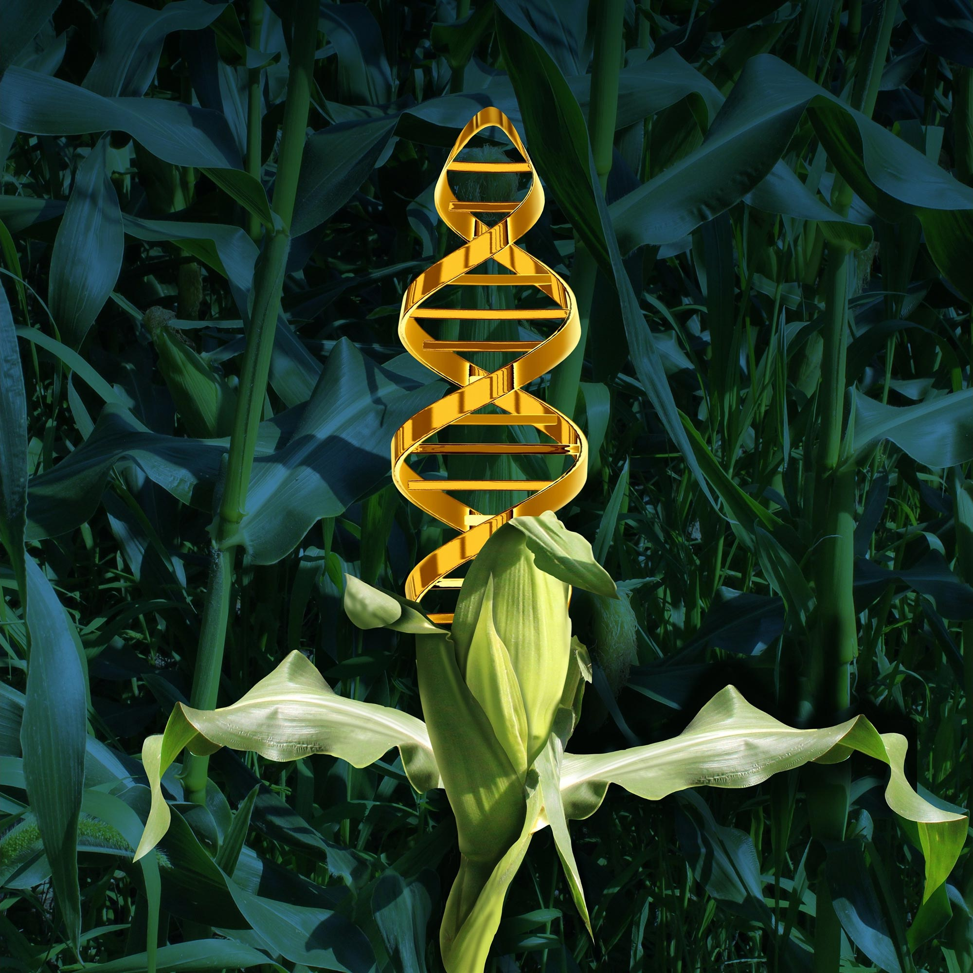 Naturally GM: Crops Steal Genes From Other Species to Accelerate Evolution - SciTechDaily
