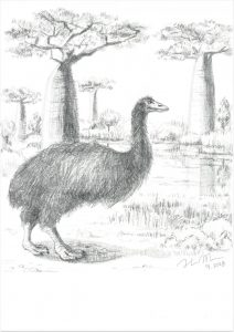 Giant Elephant Bird