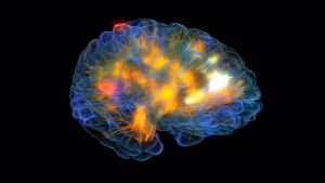 Glass Brain Provides Researchers With a Window Into the Mind