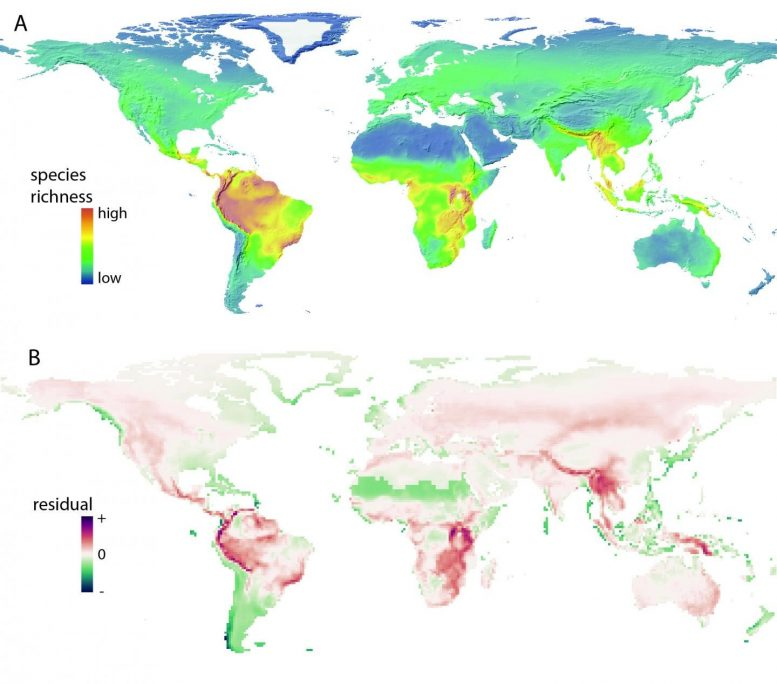 Global Pattern of Species Richness