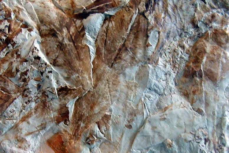 Glossopteris Leaf Fossilized