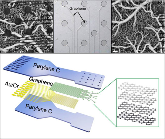 Graphene Sensors Could Provide Unprecedented Insights into Brain Structure