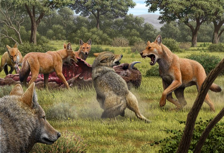 Gray Wolves Confronting Pack of Dire Wolves