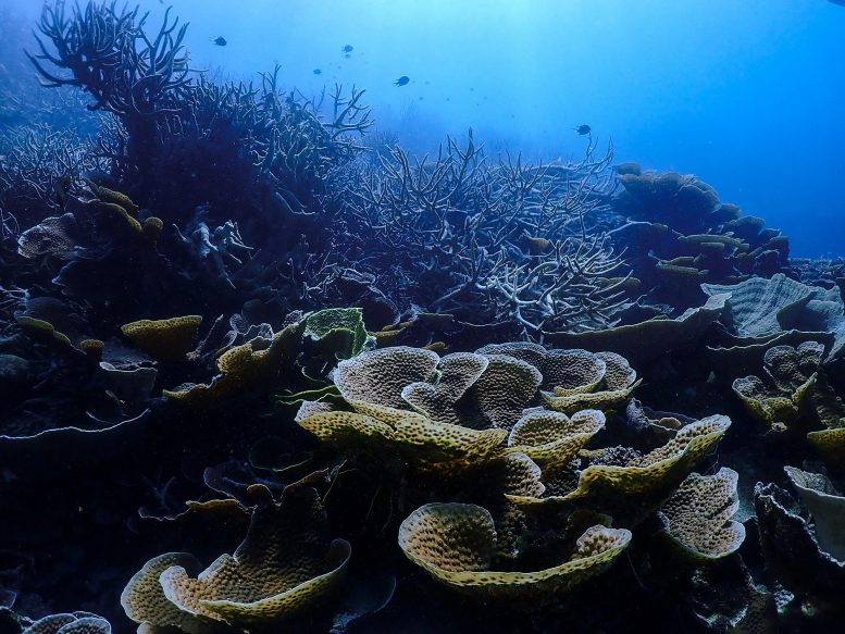 Green Coral Reef