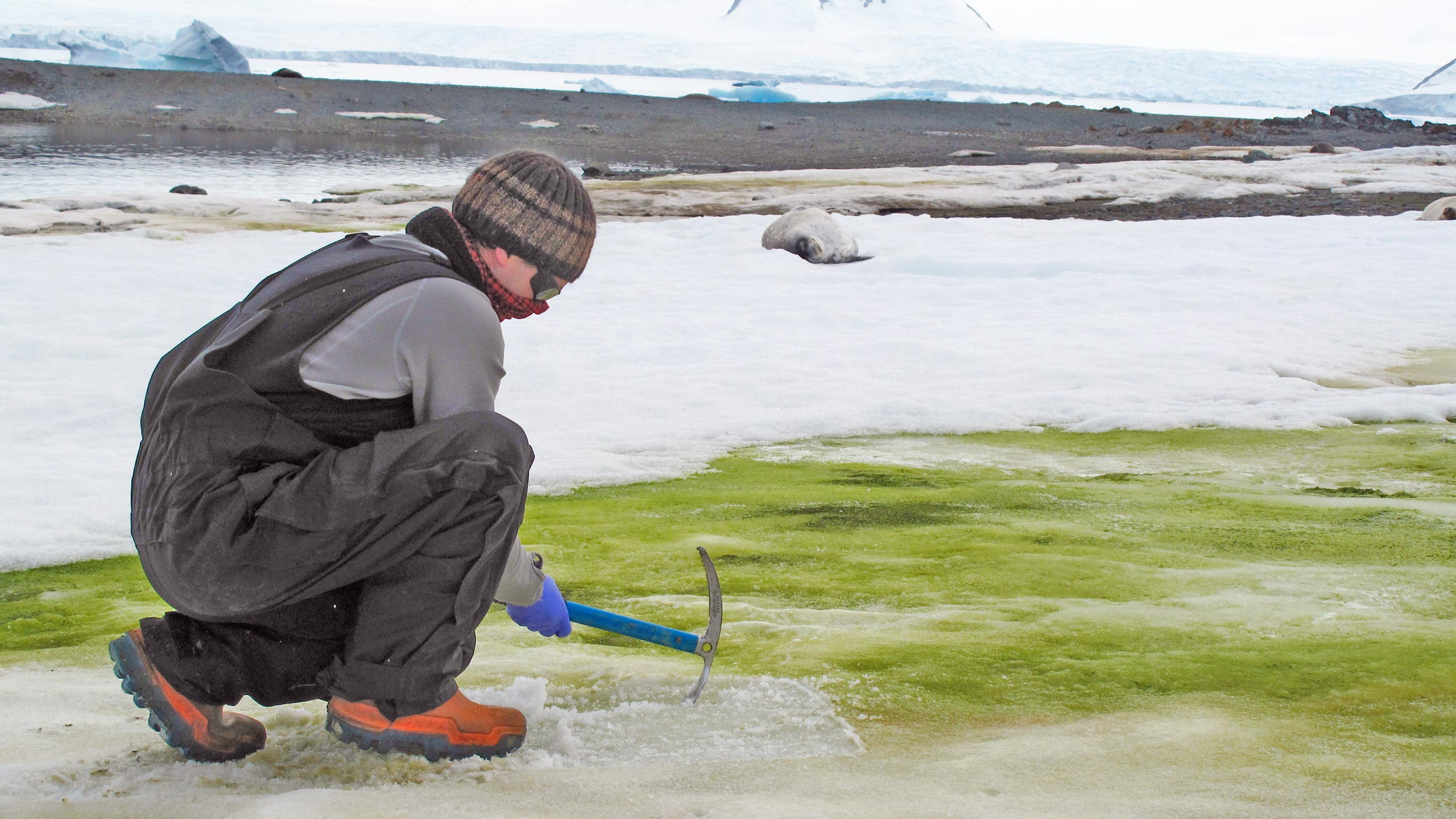 Climate Change Is Turning Parts of Antarctica Green, But It's Not Grass