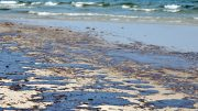 Gulf Oil Spill on a Beach