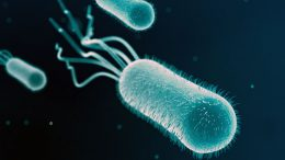 Gut Bacteria Robs Key Nutrient