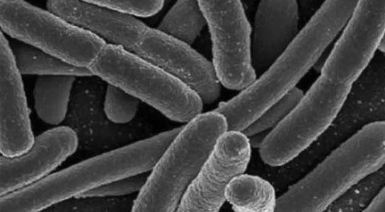 Gut Bacteria's Key Role in Immunity