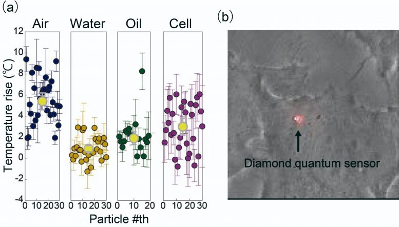 HeLa Cell With a Hybrid Sensor Inside