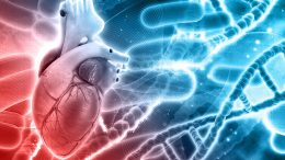 Heart Cells' Environment a Major Factor in Heart Disease
