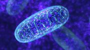 Heat Boosts Mitochondrial Function