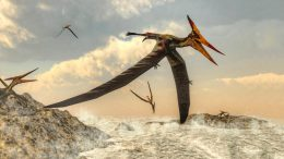 High Flying Pteranodon