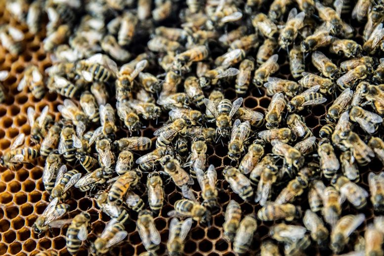 Honey Bees Share Food, Information and Viruses