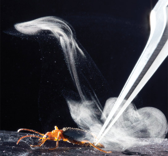 How Bombardier Beetles Produce an Explosive Defensive Chemical Jet