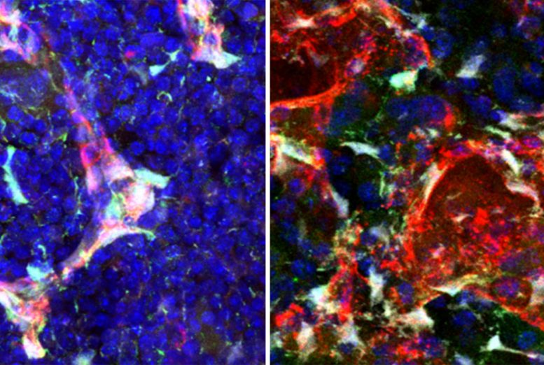 How Stem Cells Act When Stressed Versus When At Rest