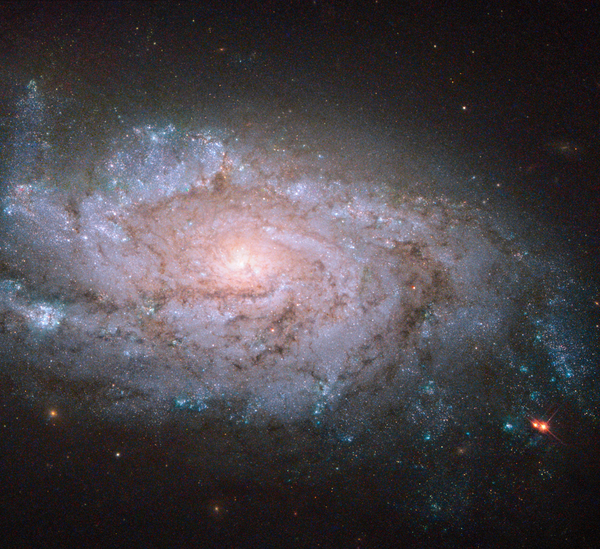 Hubble Views Spiral Galaxy NGC 1084