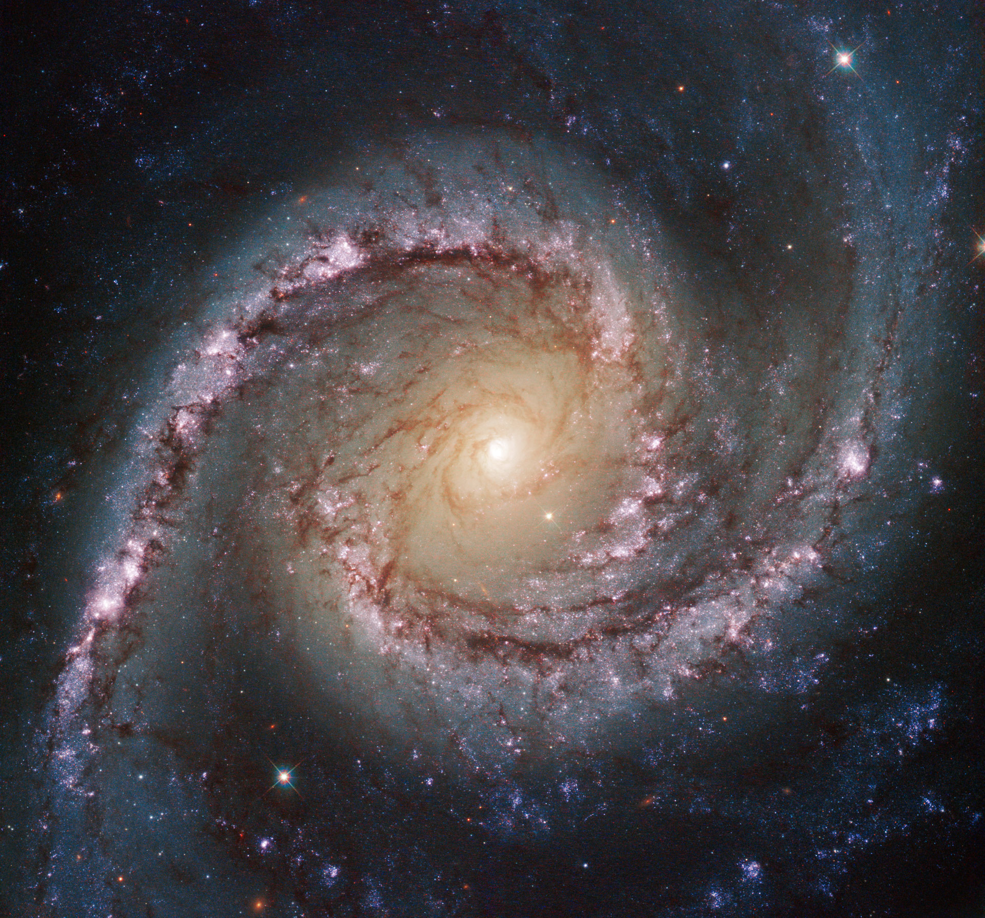 Hubble Views Intermediate Spiral Galaxy Ngc 1566