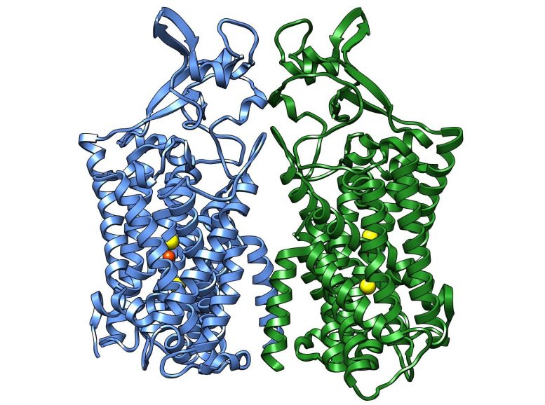 Human KCC1 Structure