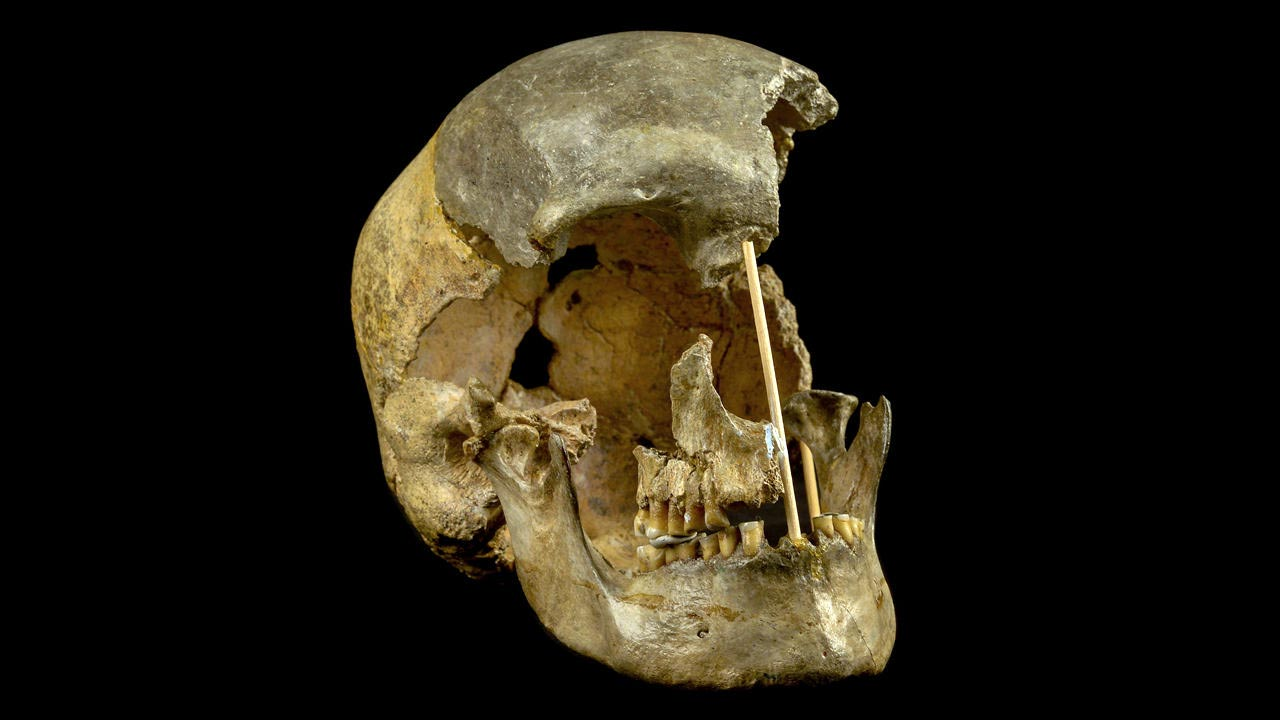 The oldest modern human genome has been reconstructed using 45,000-year-old skull DNA