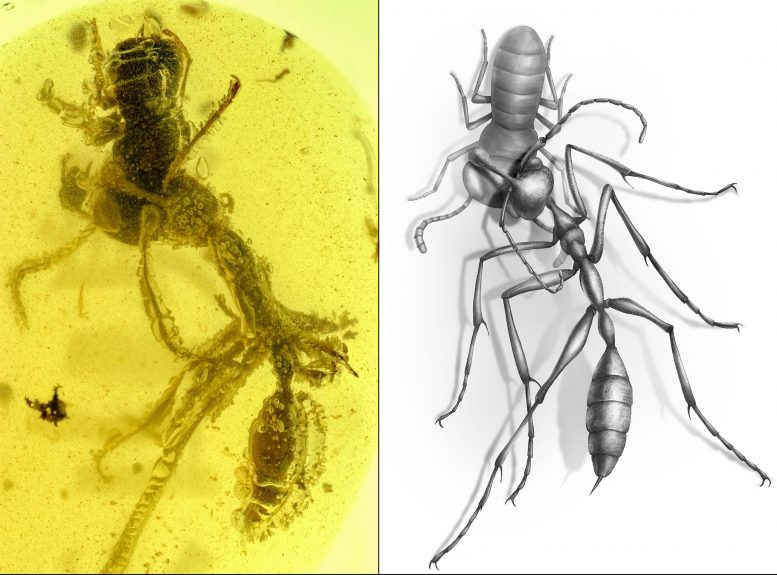 Hunting Hell Ant Fossil Discovery