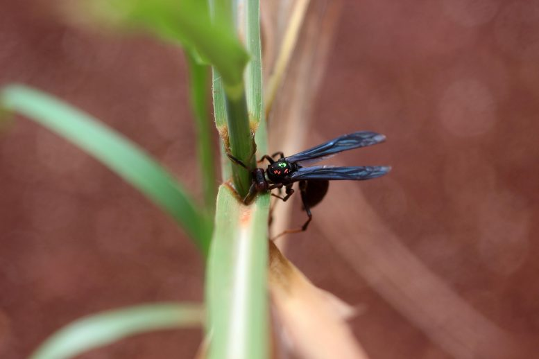 Hunting Wasp With Pest Larva