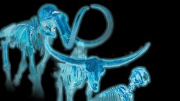 Ice Age Skeletons Offers Insights for Today's Endangered Species