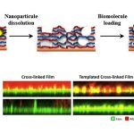 Increasing film rigidity in biomaterials