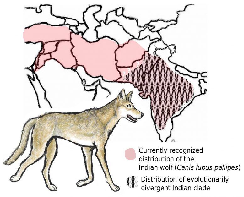 Indian Wolf Map
