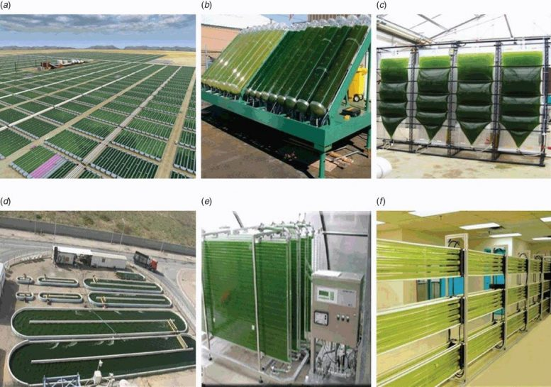 Industrial Scale Micro-Algal Bioreactors