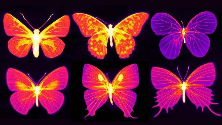 Infrared Butterfly Images