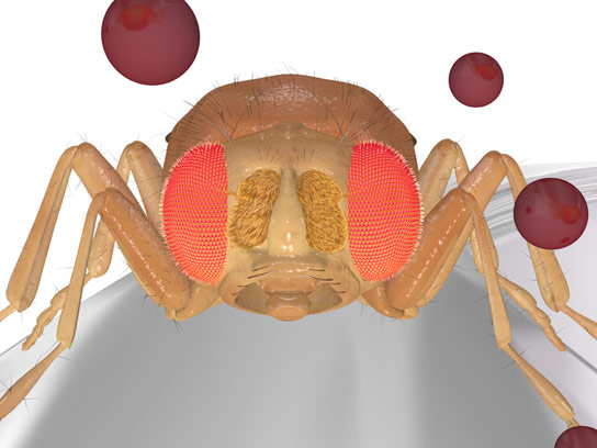 Insect Odorant Receptors Regulate Their Own Sensitivity