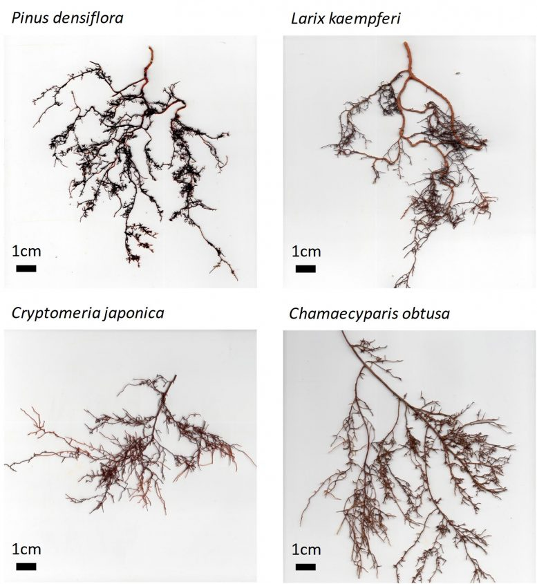 Intact Fine Root Systems