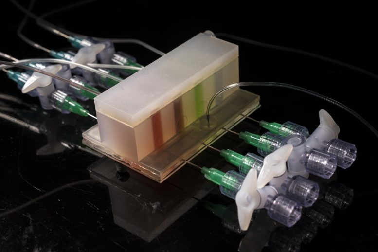 Integrated Artificial Gut Platform Developed at Lincoln Laboratory