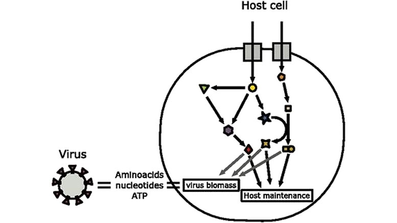 Integrated Host Virus Metabolic Modeling Approach