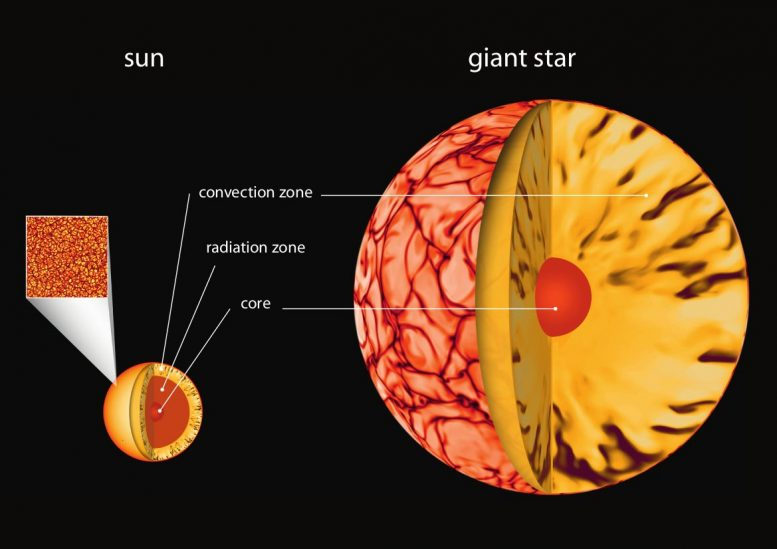 Interior of Sun and Giant Star