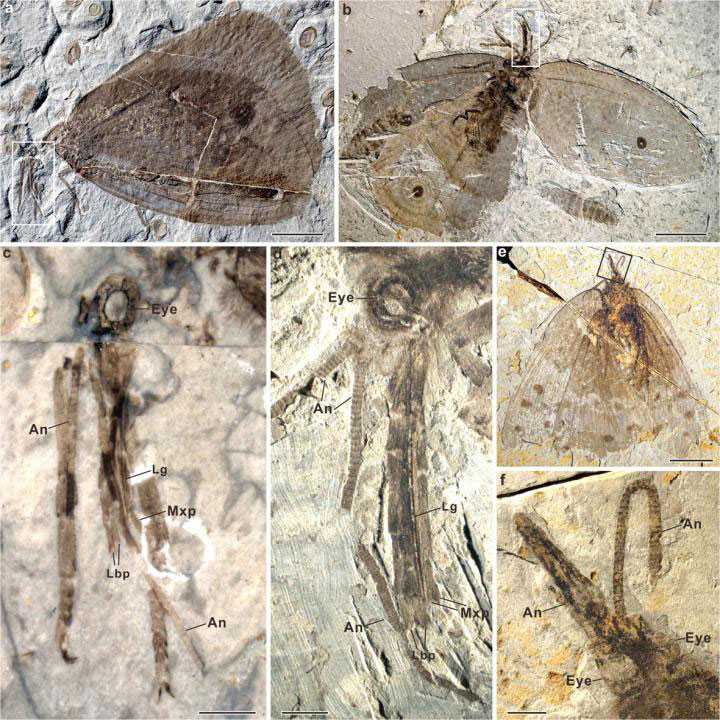 Jurassic and Cretaceous Kalligrammatids from China