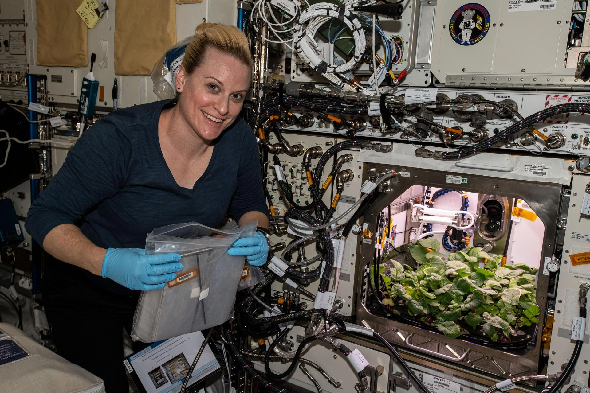 NASA grows first radishes on board the International Space Station