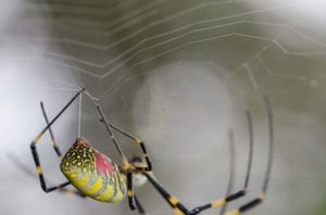 Key Mechanism Behind the Formation of Spider Silk