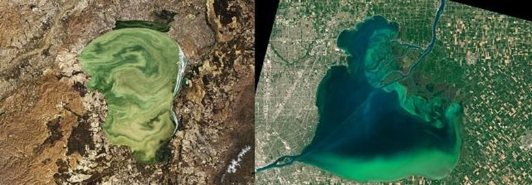 Lake Khanka and Lake St. Clair