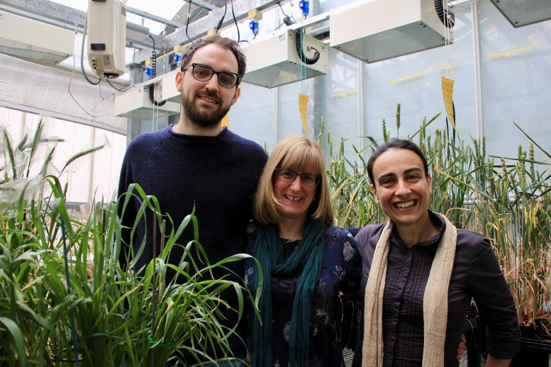 Lancaster Wheat Research Team