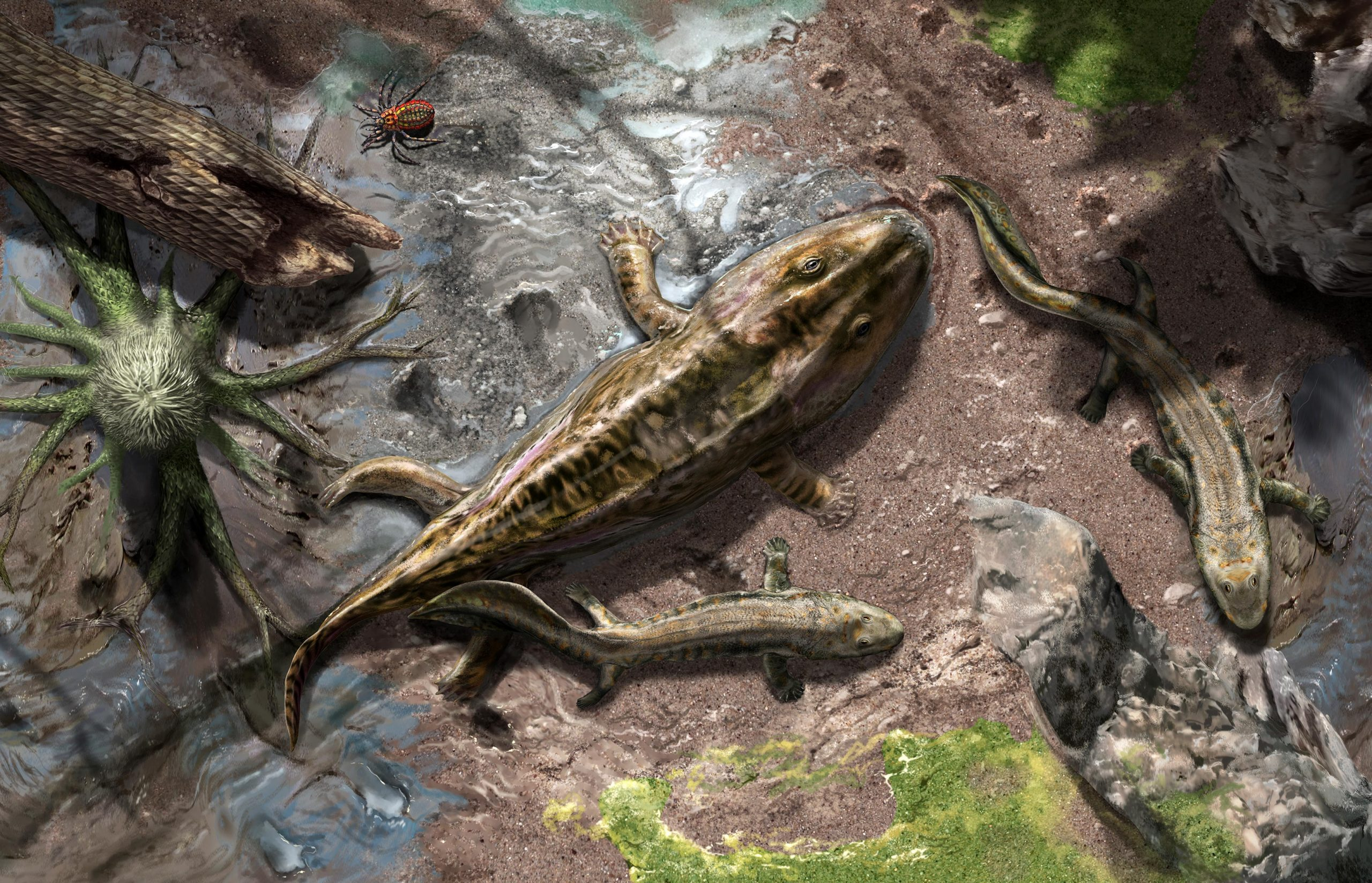 From Fins to Limbs and Water to Land: Evolution of Terrestrial Movement in Early Tetrapods - SciTechDaily